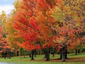 fall foliage4
